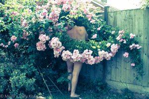 Molly's daily kiss rose garden