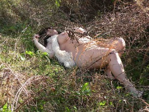 woman laying naked in the bush