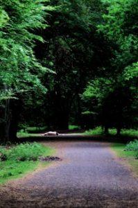 woman laying naked on woodland path