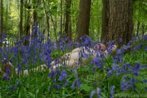 Domsigns laying naked in the bluebells