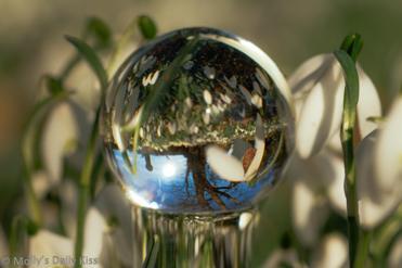 Snowdrops reflected in glass dildo