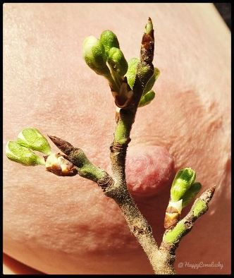 buds on plant with nipple in the background