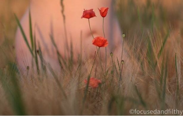 looking through meador grass and red poppies to naked body